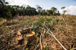 desmatamento-floresta-e1477452333435
